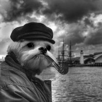 dog_battleship