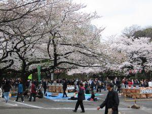 800px-Ueno-Park