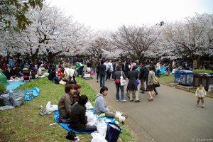 Cherry-Blossoms-2007-Yoyogi-Park-Tokyo-022
