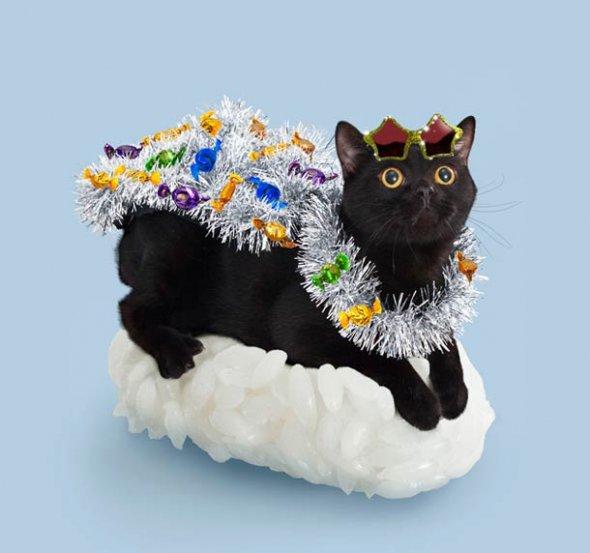 Картинки по запросу Суши коты