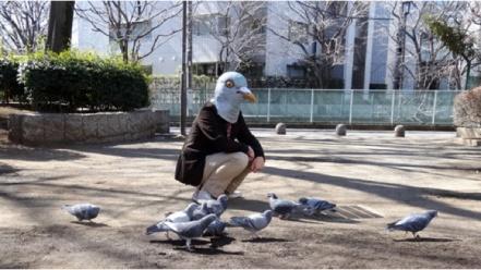pigeon3