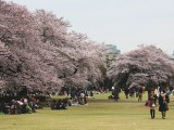 Introvert Special: Top Less-Crowded Places to See Cherry Blossoms In and AroundTokyo