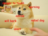 Such GIF, So Pictures: The 10 Funniest Doge Memes