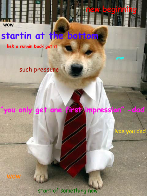 job interview shiba