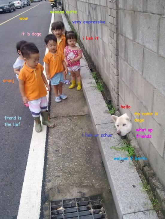 kids and shiba