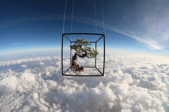 bonsai in space 2