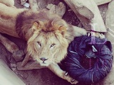Now You Can Buy Jeans Ripped Up by Zoo Animals