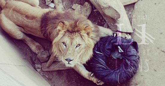 lions jeans 1
