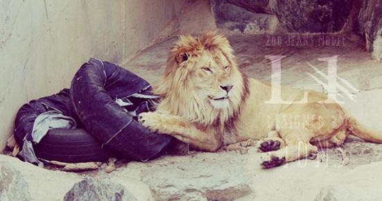 lions jeans 2