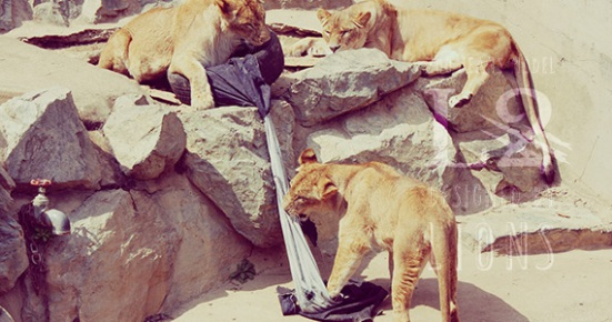 lions_jeans