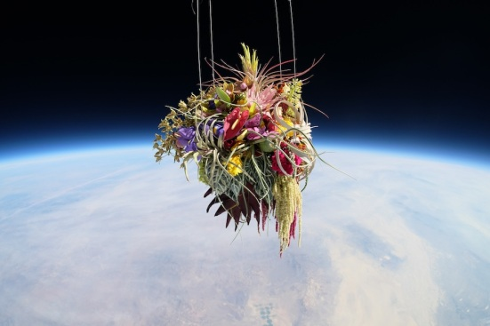 plants in space 4
