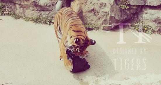 tiger jeans 2