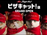 Videos: Pizza Hut Advertises With Store Staffed by IncompetentCats