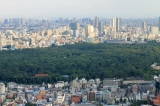 Most of Yoyogi Park Closed Due to Dengue FeverOutbreak