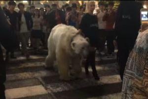 shibuya polar bear
