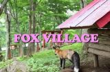 Video: Japan's Fox Village