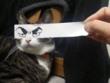 Gallery: Japan Proves They can do the Internet too with Hilarious Cartoon Cat EyesMeme
