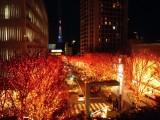 The 10 Best Winter Illuminations inTokyo