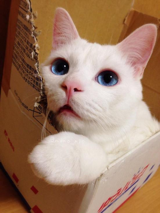 cat face 1